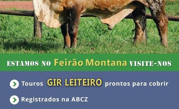 Fazenda Cabeceira do Prata participa do Feirão Montana em MS